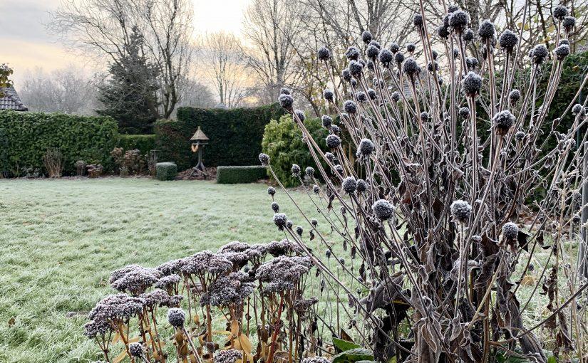 Mijn tuin in de winter